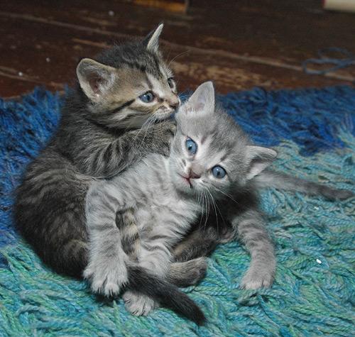 cats171.jpg