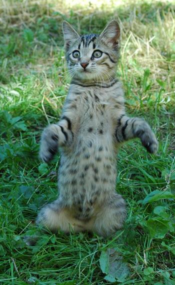 cat317.jpg