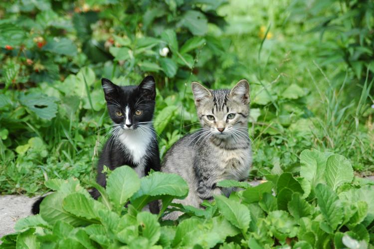 cat320.jpg